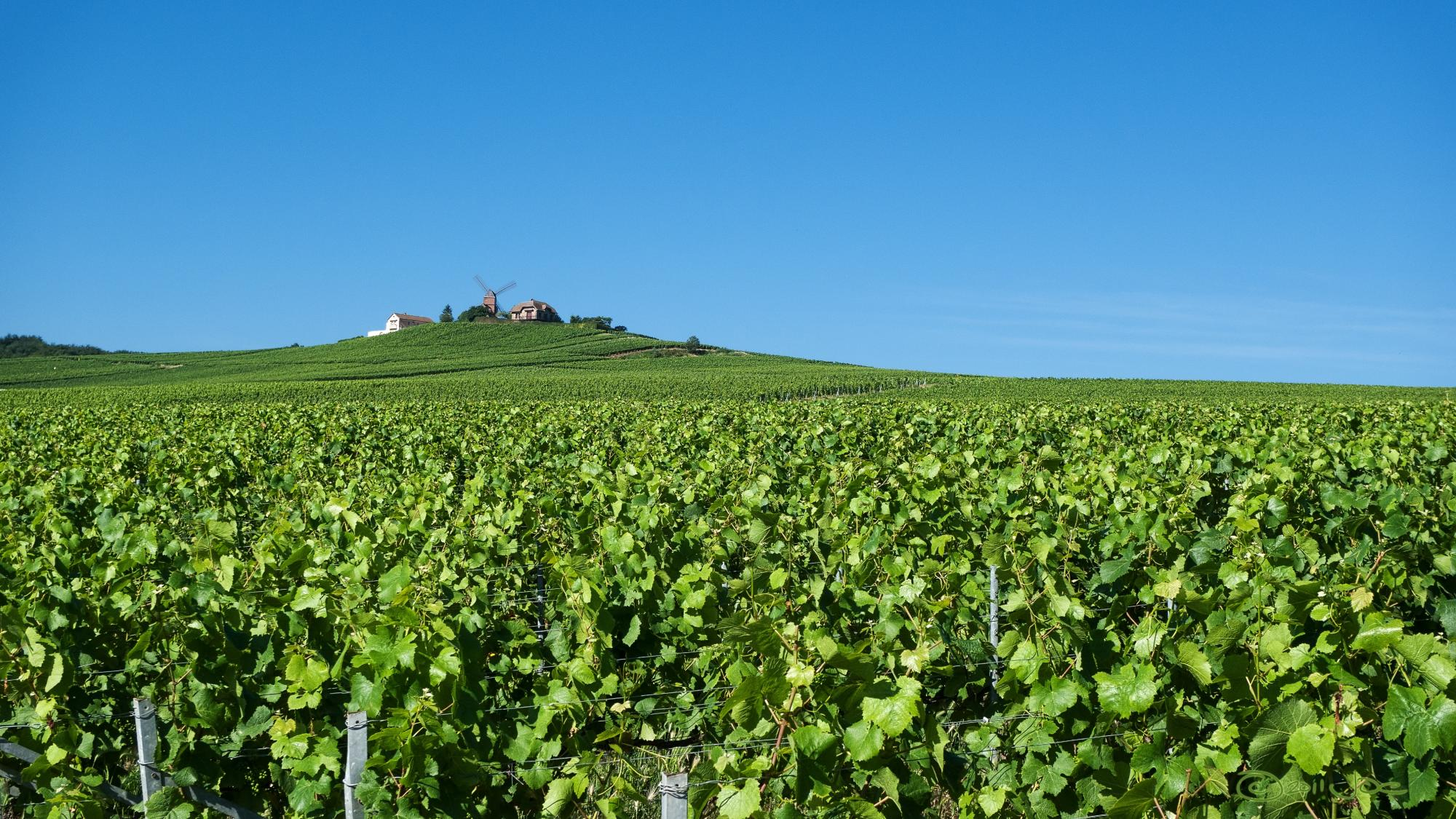 Discover Champagne - Vacation package : France, The Grand Tour  - Land of France, travel agency in France
